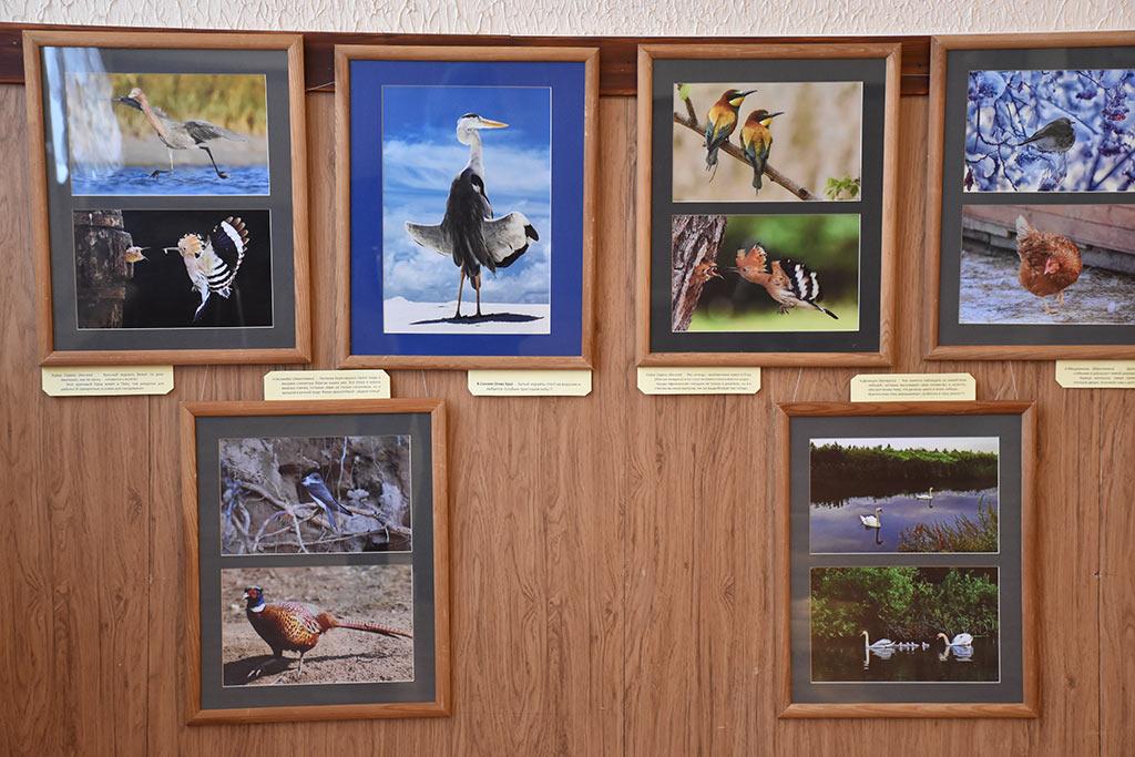 Выставка «Птицы в объективе природы» открылась в фойе Центра культуры и искусств им. Л.Н. Кекушева